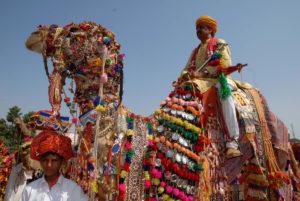 Nagaur Cattle Festival