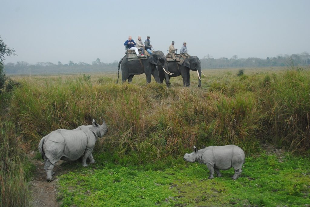 Assam, Wildlife in Assam, Awesome Assam, Assam Tourism, Assam Culture, Assam, Tiger Spotted in Assam, Cuisine of Assam, Assamese Culture, Tourism in Assam, Where to go in Assam, What to do in Assam, What to eat in Assam